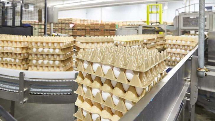کمبودی در تولید تخم مرغ نداریم