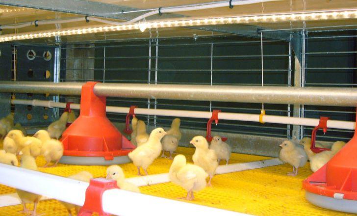 رشد ۶۶ درصدی ارزش صادرات تجهیزات مرغداری