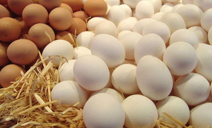صادرات مرغ و تخم مرغ به عراق آزاد شد