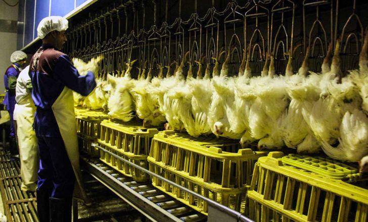 در هر ساعت 28 هزار قطعه مرغ در استان مرکزی کشتار می شود