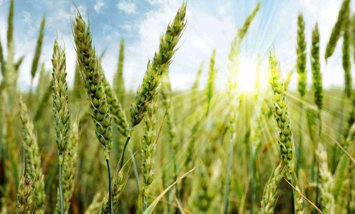 رشد واقعی اقتصاد کشاورزی در رشد ضریب بهره وری