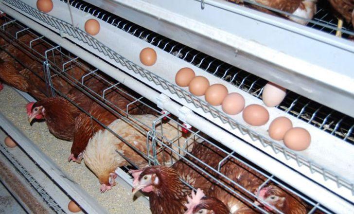 مازاد عرضه تخم مرغ نسبت به تقاضای داخلی