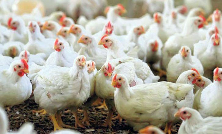 کارگاه آموزشی کاهش سن و وزن کشتار مرغ گوشتی برگزار شد