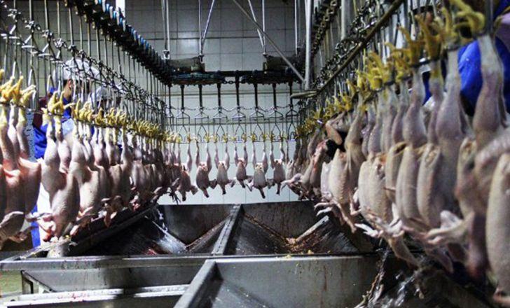 تولید سالانه 27 میلیون قطعه مرغ در لرستان