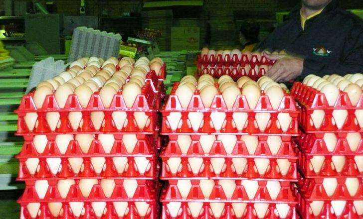 عرضه تخم مرغ در خوزستان به صورت کیلویی شد