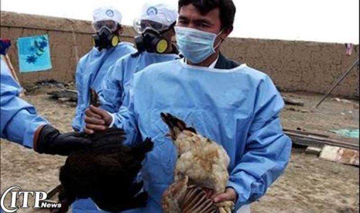 آزمایش تشخیص مولکولی آنفلوانزای پرندگان در قزوین انجام شد
