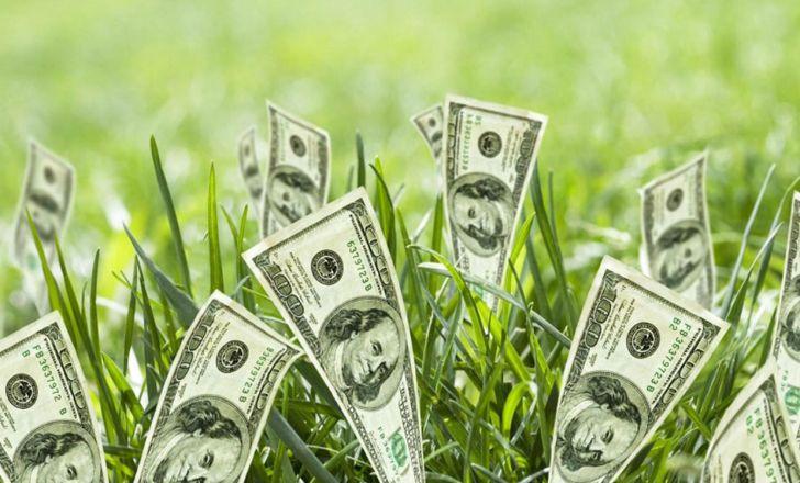 نرخ دلار، مبنای اصلی قیمت نهادههای دامی است