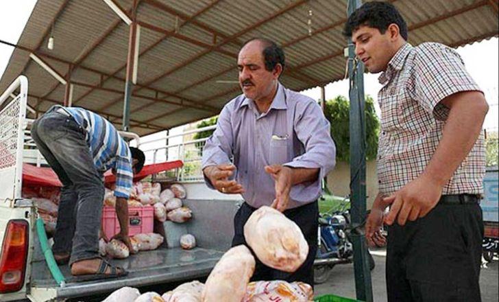 کاهش قیمت مرغ طی ۲ روز گذشته