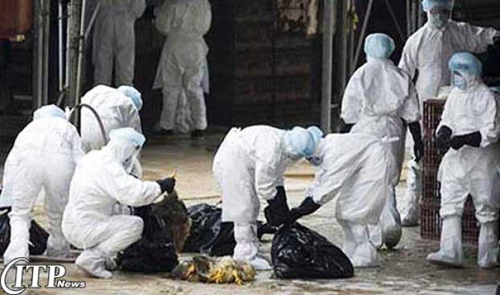 گزارشی از آنفلوآنزایمرغی با حضور رئیس سازمان دامپزشکی در مجلس