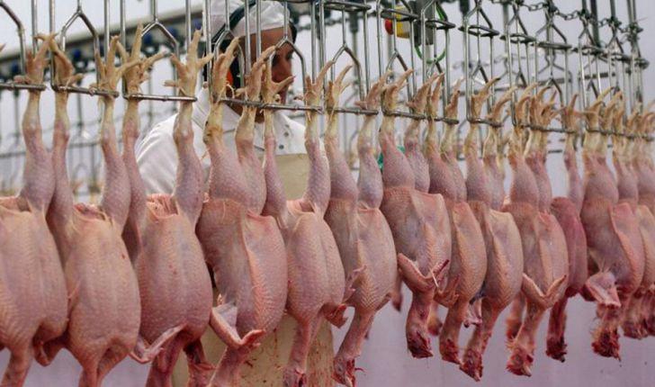 وزارت صمت هیچ ساز و کاری برای تحویل مرغ از مرغداران ندارد