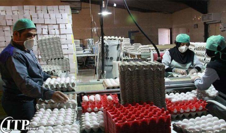 صادرات تخم مرغ موقتا متوقف شد-