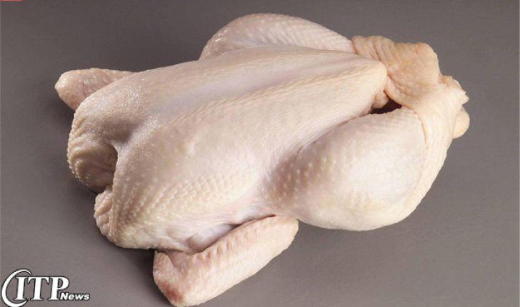 صدور 145 مجوز برای تولید مرغ بدون آنتیبیوتیک در کشور