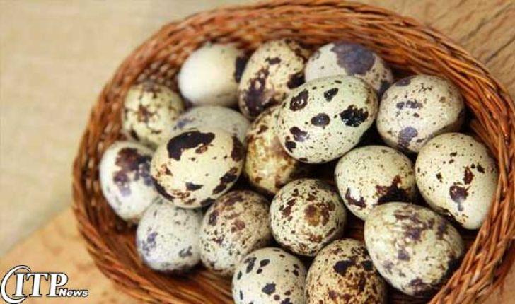 اجرای طرح تشدید نظارت بر عرضه تخممرغ و تخم بلدرچین در قزوین