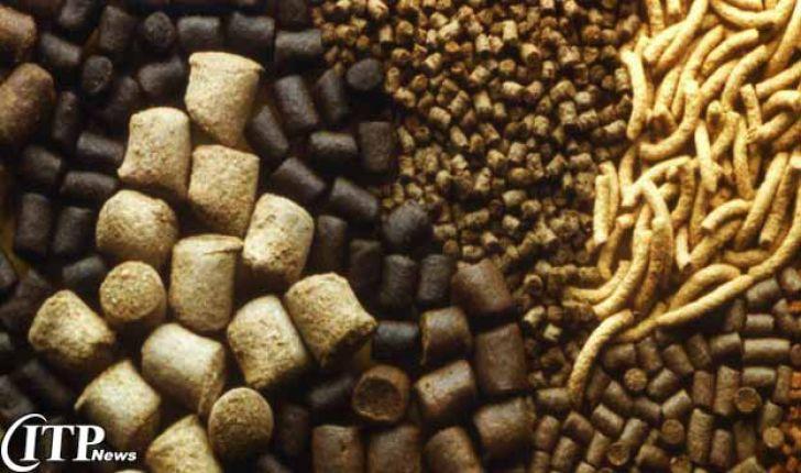 پیشبینی صادرات یک میلیون تنی خوراک دام