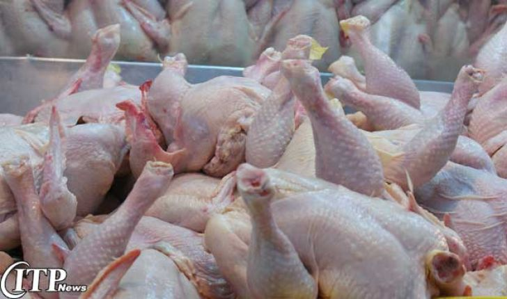 بیش از 44 هزار تن گوشت مرغ در استان کرمان تولید می شود