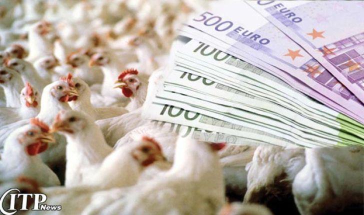 کاهش تولید راه حل نیست/ مرغداران به همه بدهکارند