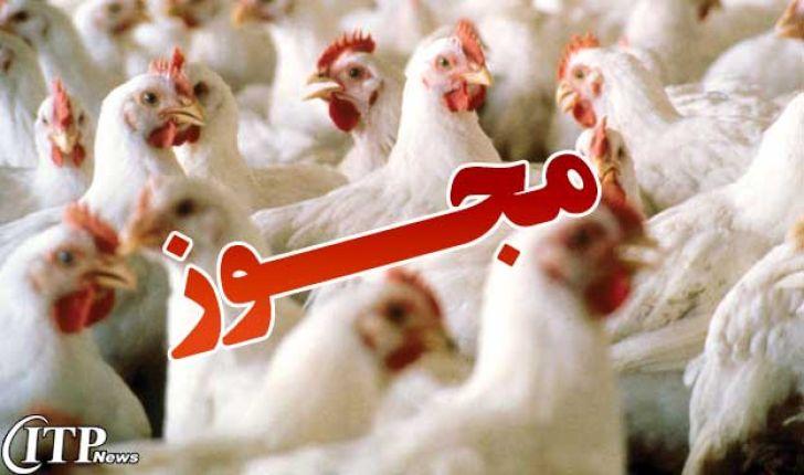 صدور بیرویه مجوز، مرغداریها را نابود میکند