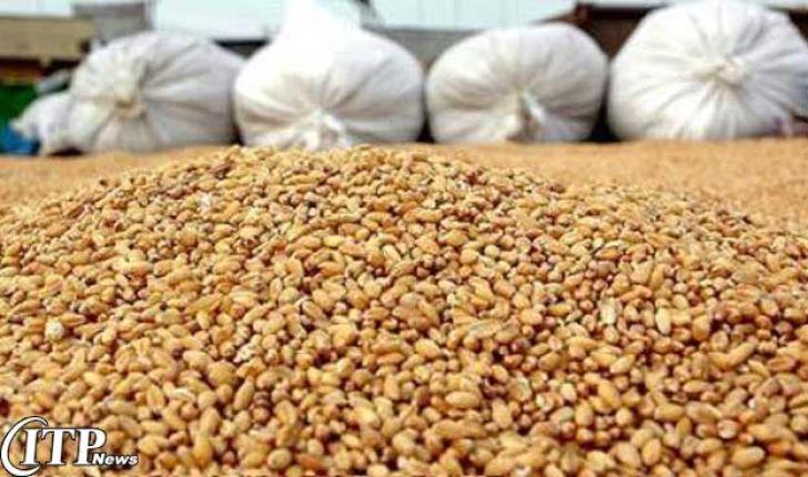 جهش صادرات خوراک دام شاه کلید اقتصاد مقاومتی