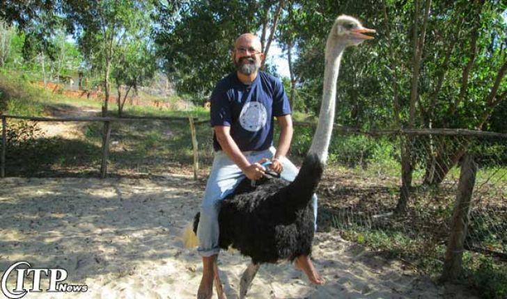 مقید کردن و نحوه کار با شتر مرغ