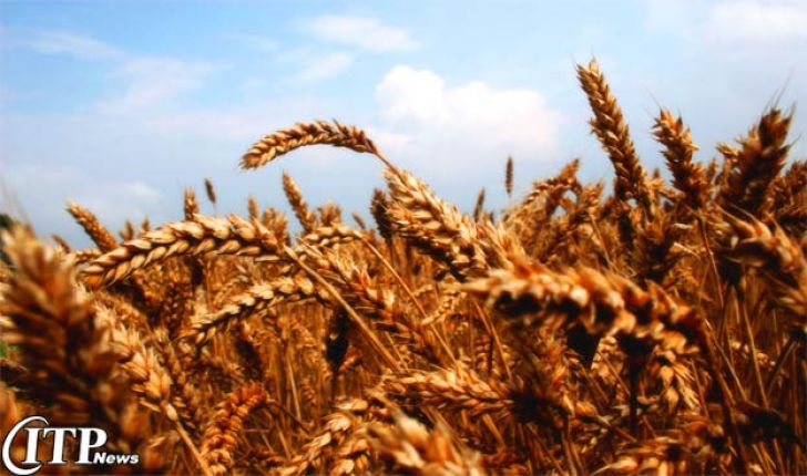واحد تولیدی 40 هزار تنی خوراک دام در مرند بهره برداری شد