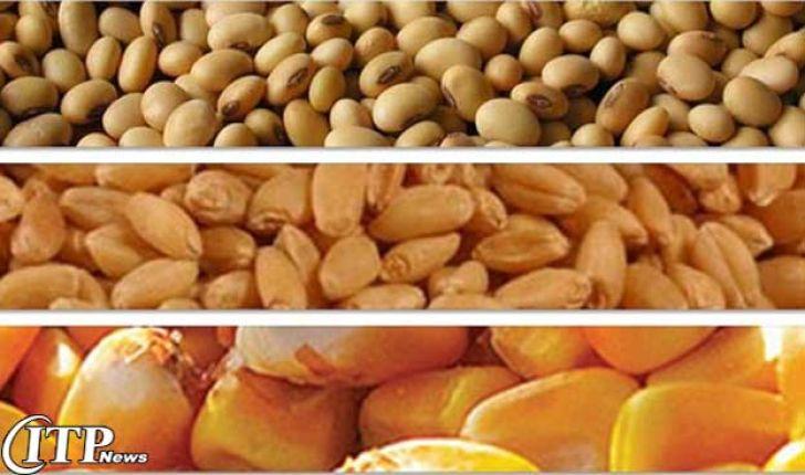افزایش 71 درصدی صادرات خوراک دام و طیور از خراسان رضوی