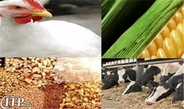 پاسخگویی به تقاضاهای صادراتی نیازمند ساماندهی میان تولید و بازاریابی است