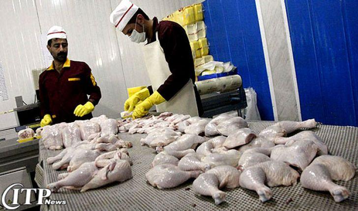 تولید گوشت مرغ در قزوین ۳۸ درصد افزایش یافت