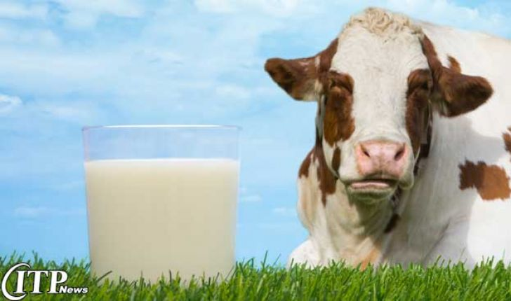 تولید گوشت قرمز و شیر در استان بوشهر افزایش می یابد