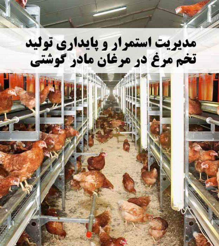 مدیریت استمرار و پایداری تولید تخم مرغ در مرغان مادر گوشتی