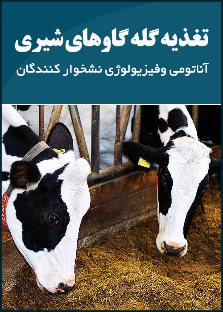 تغذیه گله گاوهای شیری