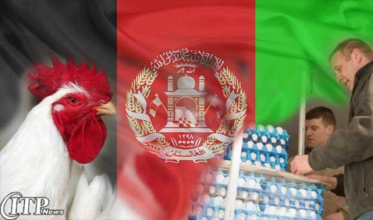 واردات گوشت، تخممرغ و مرغ زنده ایران به افغانستان ممنوع شد