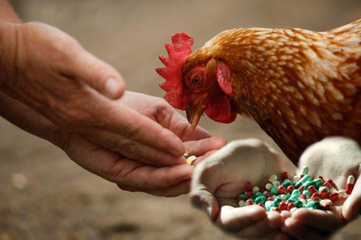 6 کار عملی برای داشتن خوراکی بدون آنتی بیوتیک و فراتر از مکمل ها
