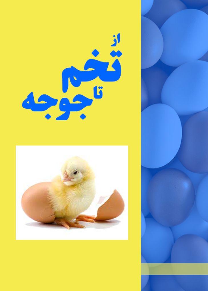 از تخم تا جوجه