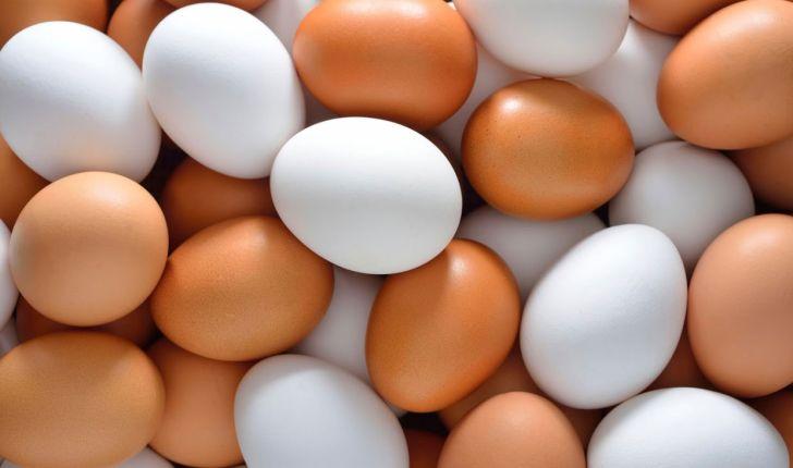 اجزاء تشکیل دهنده تخم مرغ