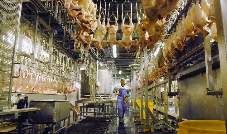 کشتار مرغ در گلستان نسبت به هفته قبل 50 درصد رشد داشت