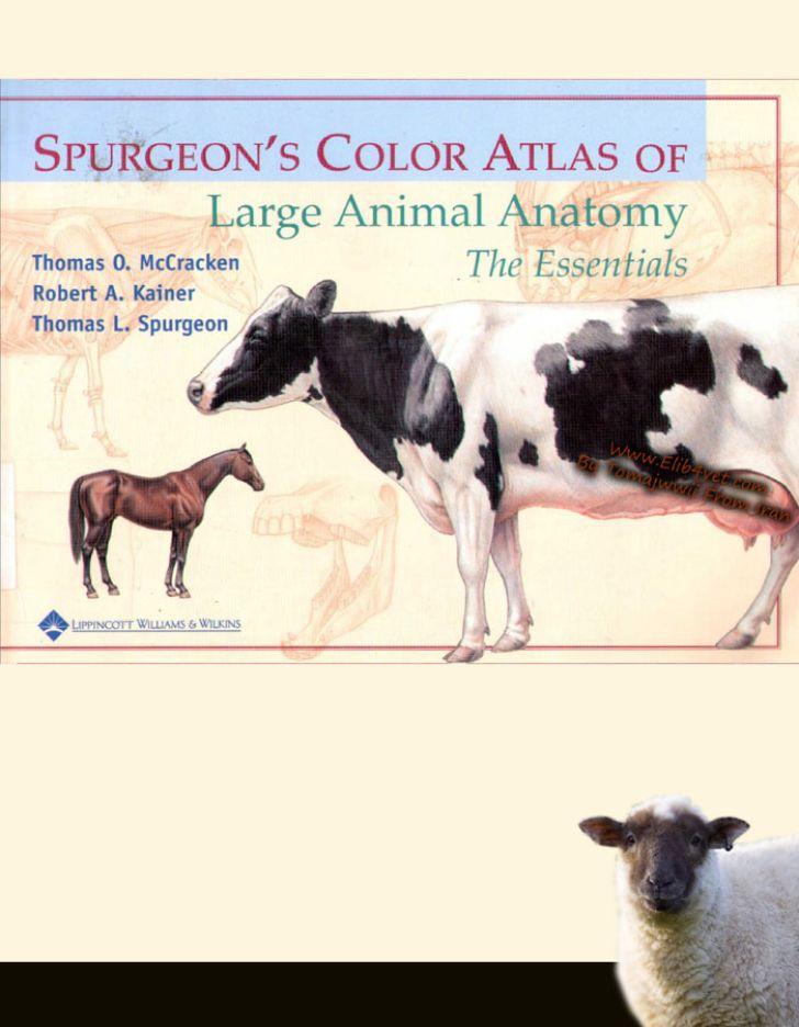 دانلود کتاب اطلس رنگی آناتومی حیوانات بزرگ