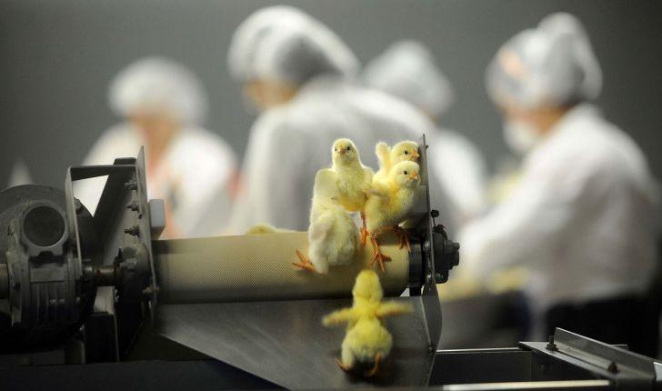 استفاده از فرصتهای تجاری مرغ با بهرهگیری از تجهیزات روز جهان