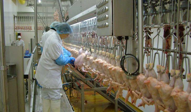 اهمیت فرایند کشتار و پیش از کشتار در عرضۀ گوشت باکیفیت