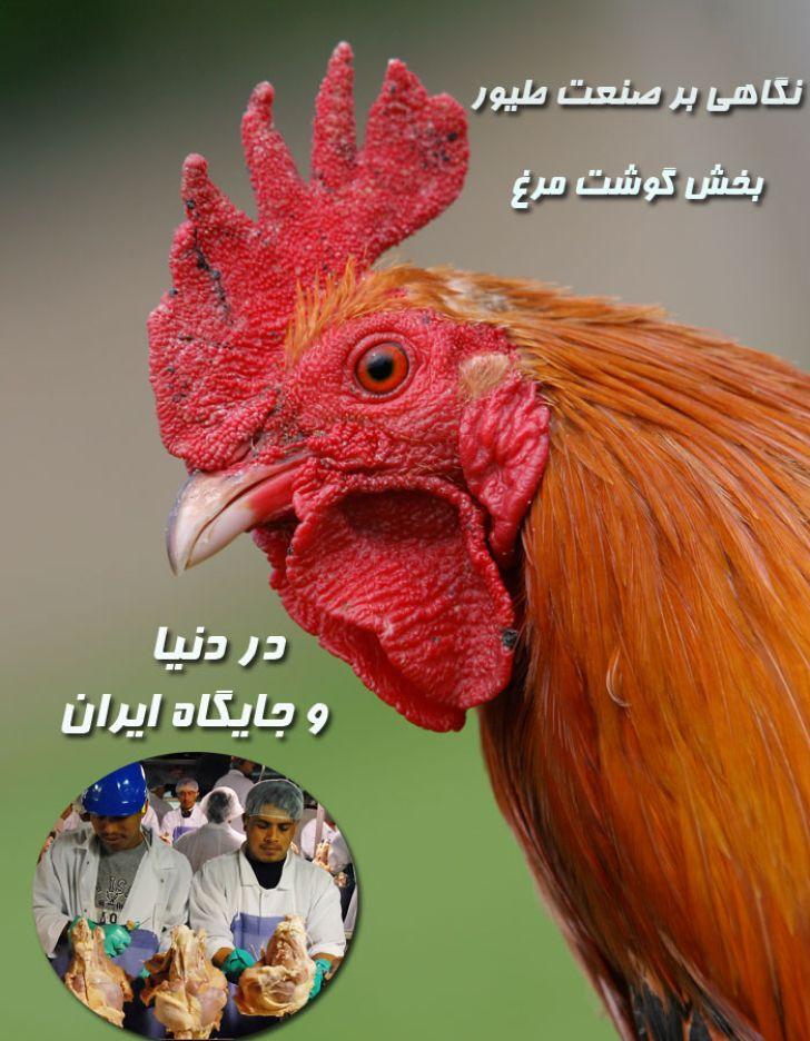 نگاهی بر صنعت طیور بخش گوشت مرغ