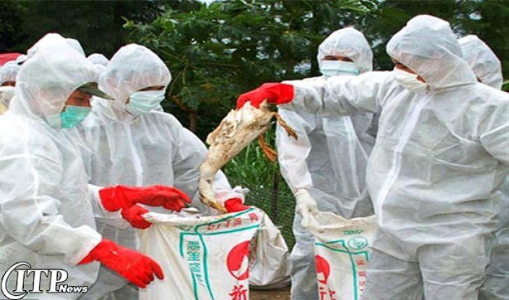 بیماری آنفلوآنزای پرندگان گریبانگیر 32 کشور دنیا