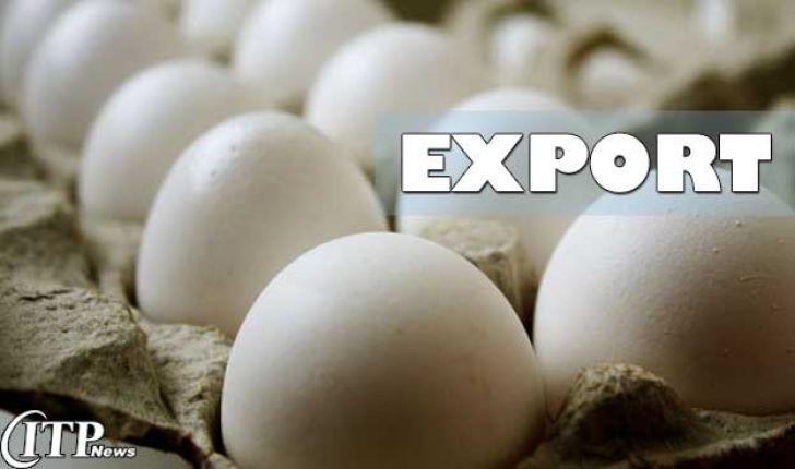 رفع مشکل صادرات تخم مرغ به افغانستان در آینده نزدیک