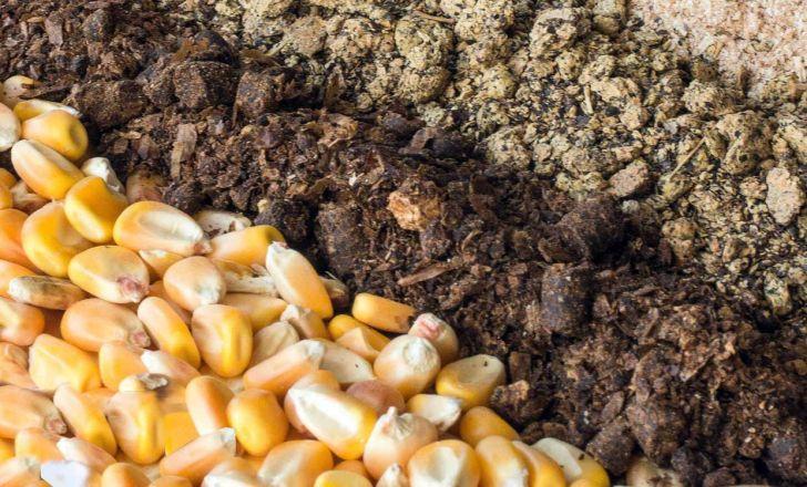 صادرات خوراک دام و طیور به 16 کشور