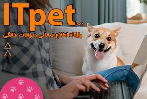 سایتitpet.net